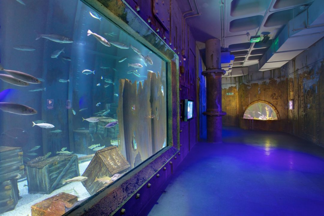 Bristol Aquarium - Helm Tickets